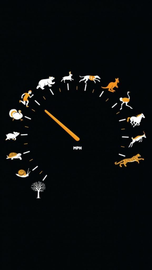 Funny-Gauge-Animals-Speed-iPhone-Wallpaper-PIC-MCH066714-577x1024 Funniest Wallpapers For Iphone 46+