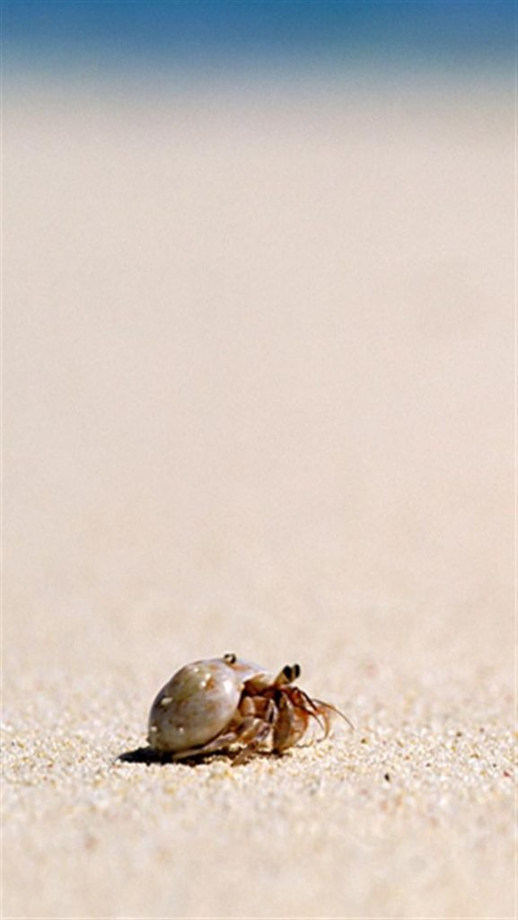 Hermit-Crab-Animal-x-wallpapers-PIC-MCH072887-577x1024 Cute Crab Wallpaper 17+