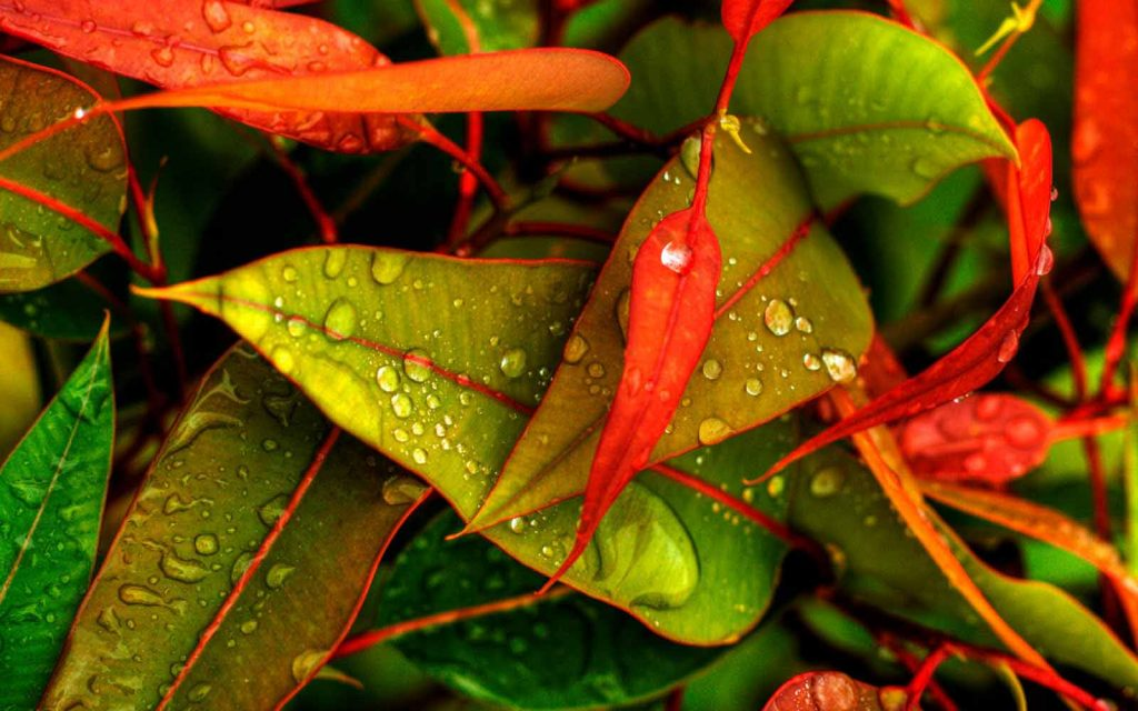 Rain-Drops-New-HD-Wallpapers-Free-Download-PIC-MCH097272-1024x640 Wallpaper New Hd 47+