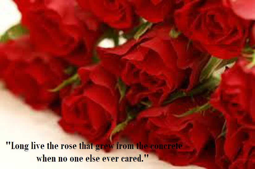 Amazing Rose Flower Wallpapers With Love Quote PIC