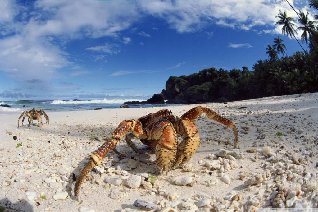 coconut-crab-wallpapers-PIC-MCH021207-1024x682 Crab Wallpaper Free 23+