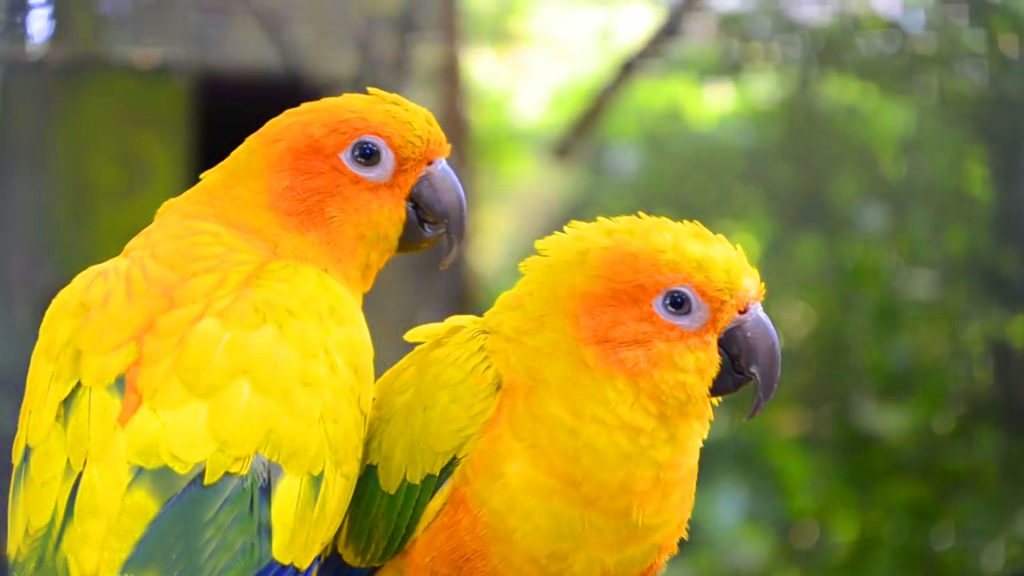 hd-pics-photos-stunning-attractive-cute-yellow-birds-pair-new-hd-desktop-background-wallpaper-PIC-MCH072198-1024x576 Wallpaper New Hd 47+