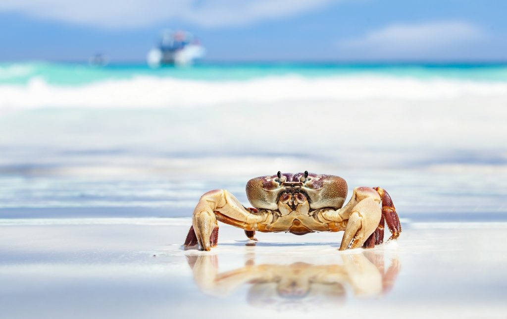 sea-crab-P-wallpaper-PIC-MCH0100921-1024x644 Crab Wallpaper Hd 17+