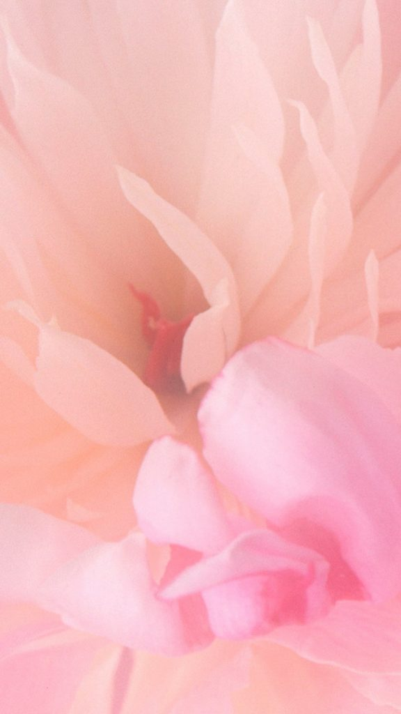 spring-PIC-MCH0103567-576x1024 Baby Pink Wallpaper Iphone 10+
