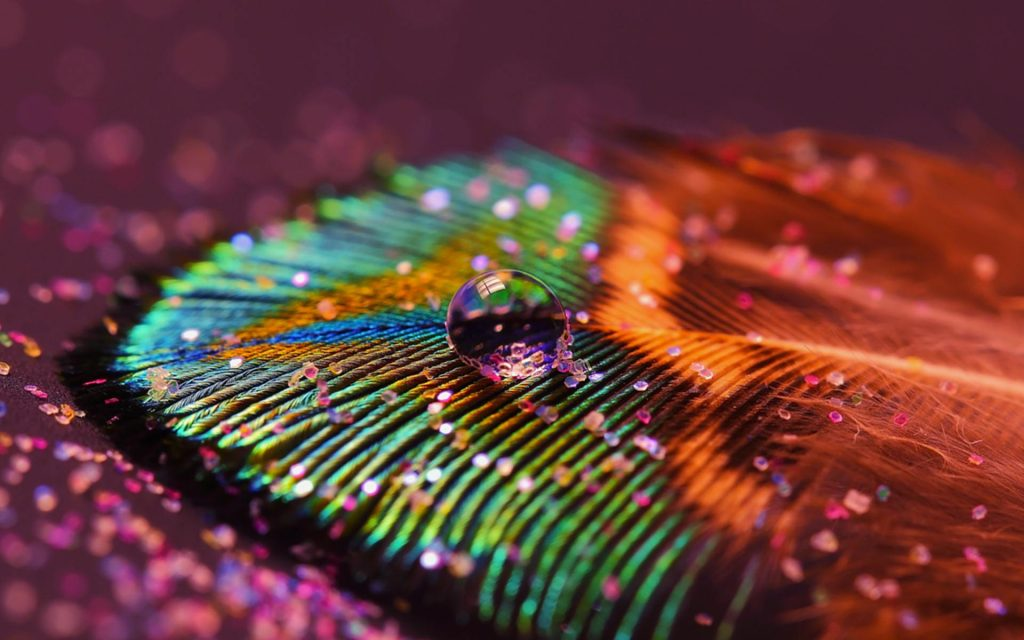 wallpaper.wiki-Peacock-Feathers-Background-HD-PIC-WPE-PIC-MCH0114251-1024x640 Chat Wallpapers Hd 18+