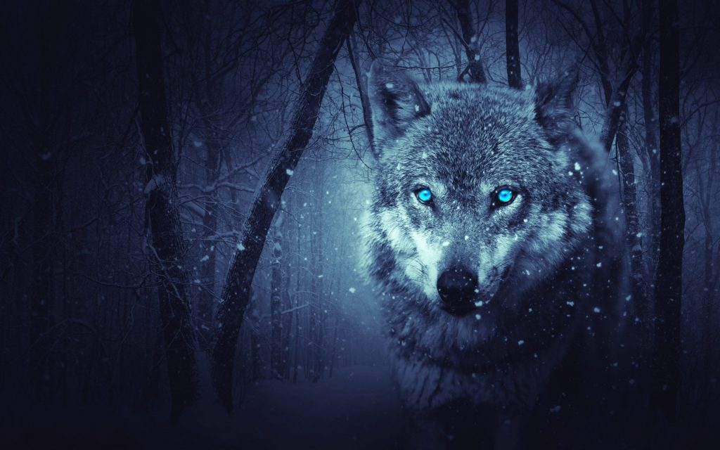 wild-wolf-x-blue-eyes-scary-snowfall-winter-k-PIC-MCH0116503-1024x640 Black And Blue Wallpaper 4k 32+