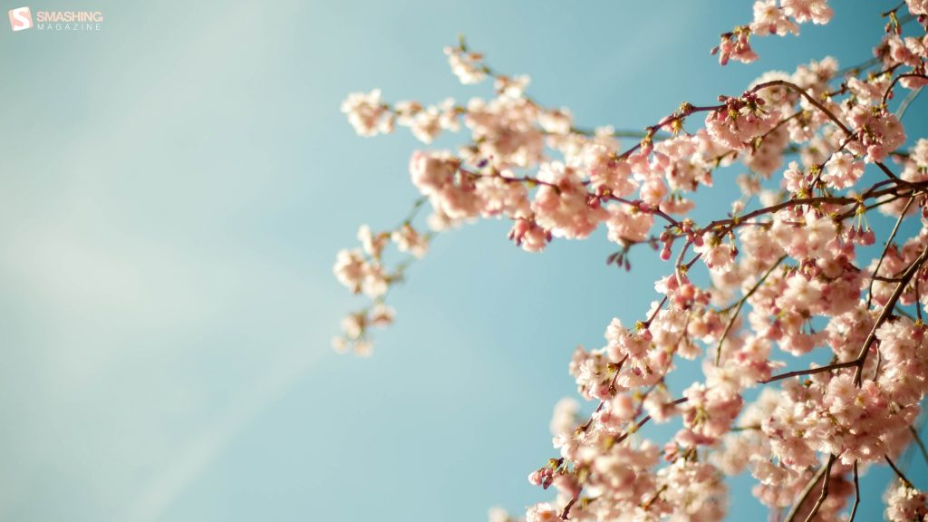ws-Spring-is-here-x-PIC-MCH0119536-1024x576 Free Mac Spring Wallpaper 55+