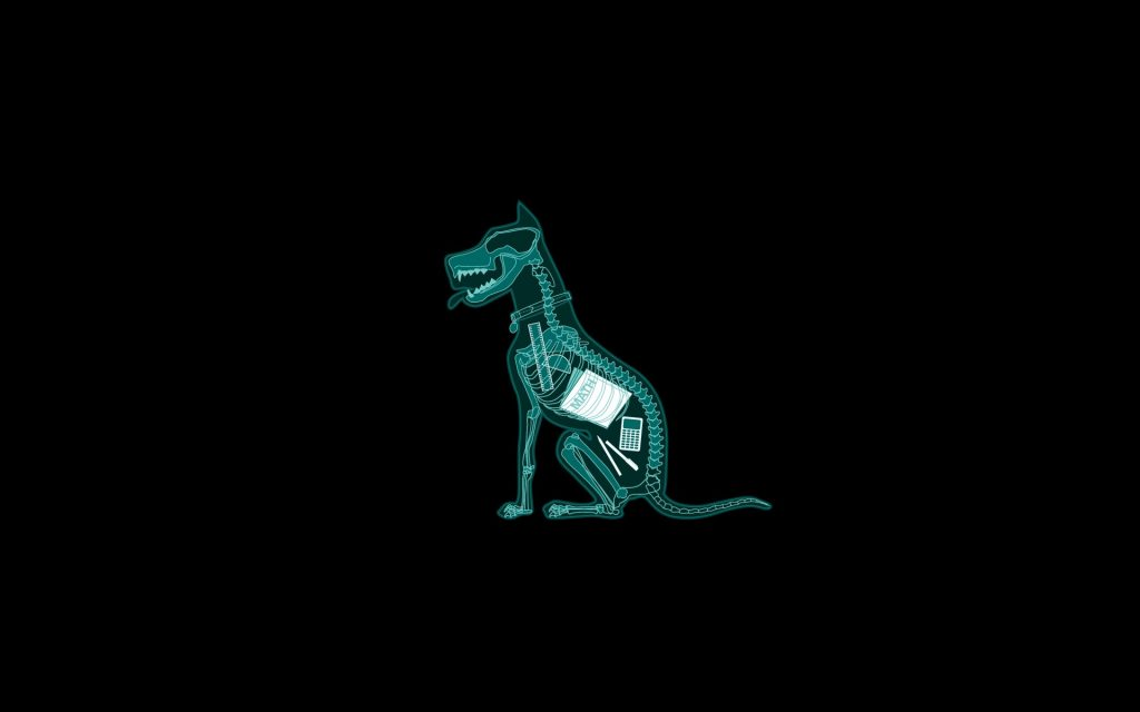 Animal-X-ray-Funny-Photo-PIC-MCH040450-1024x640 Animal X Ray Wallpaper 14+