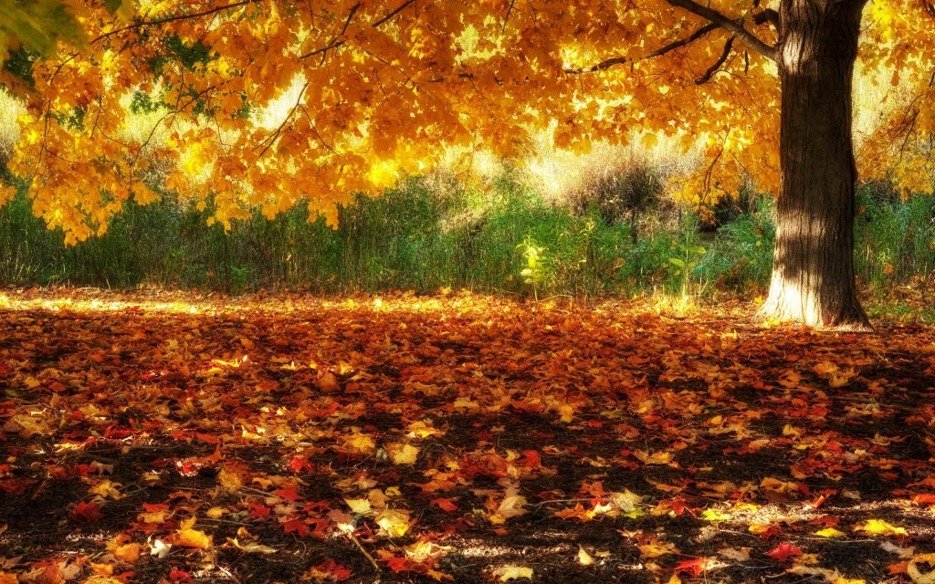 Fall-Scenery-Backgrounds-HD-PIC-MCH062989-1024x640 Free Hd Wallpapers Of Sceneries 46+