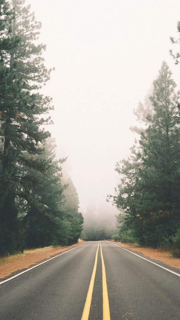 Foggy-Autumn-Pine-Road-iPhone-Plus-HD-Wallpaper-PIC-MCH064523-576x1024 Pine Tree Wallpaper Iphone 29+