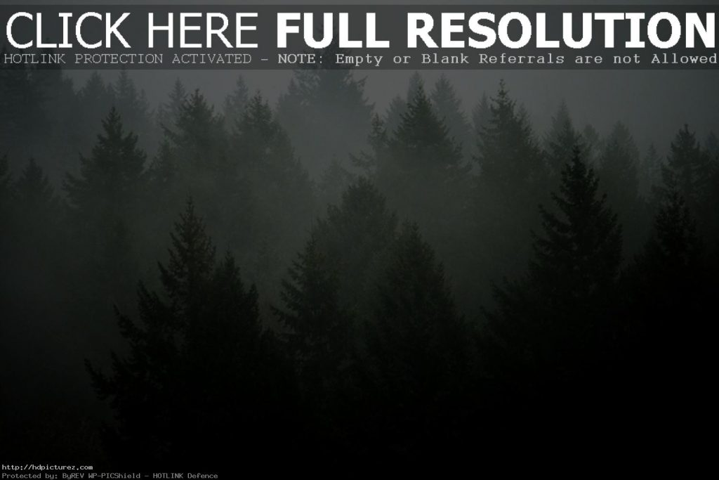 Free-Tumblr-Wallpaper-Dekstop-PIC-MCH065737-1024x683 Pine Tree Wallpaper Tumblr 13+