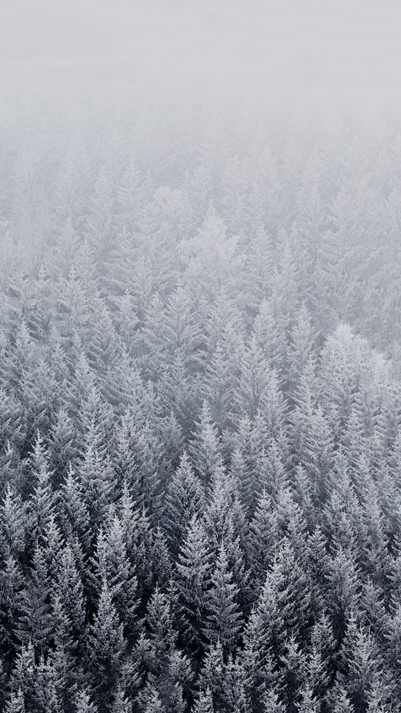 HD-Winter-Background-for-Iphone-PIC-MCH072575-576x1024 Pine Tree Wallpaper Tumblr 13+