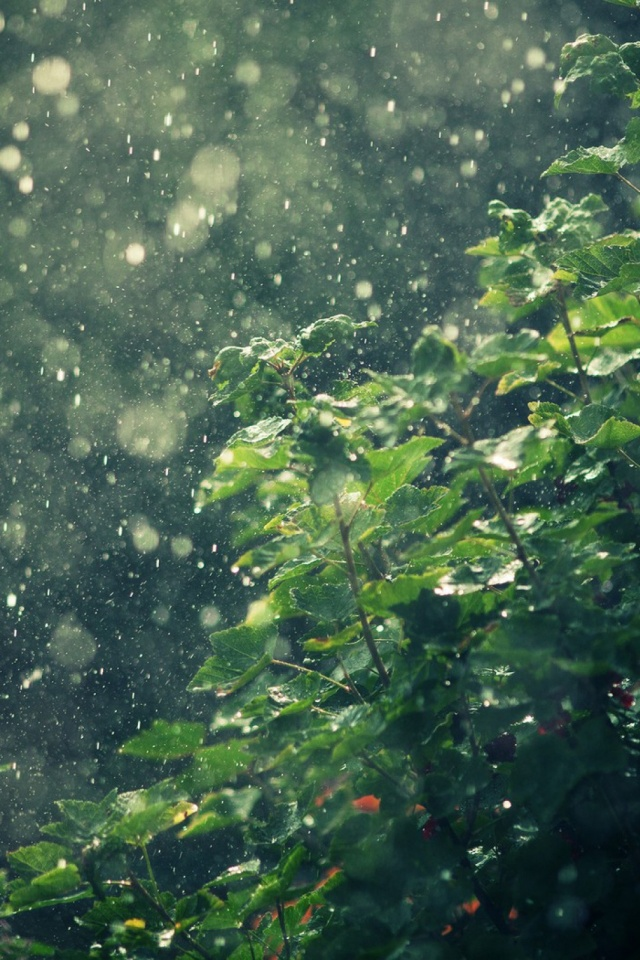 Macro-Nature-Rain-l-PIC-MCH029556 Hd Rain Wallpapers For Android 22+