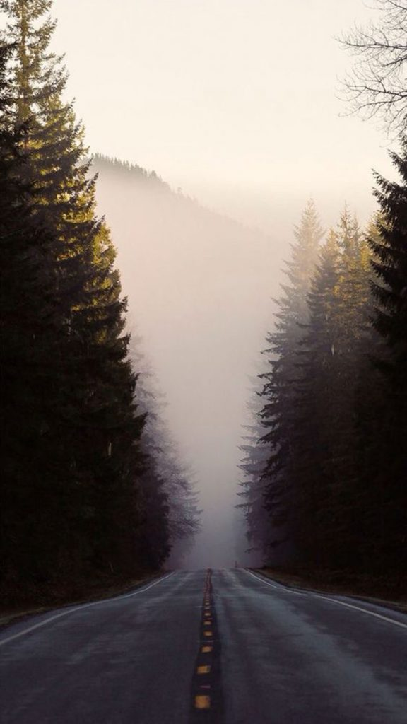 Misty-Forest-Road-Pine-Trees-iPhone-Wallpaper-PIC-MCH086784-576x1024 Pine Tree Wallpaper Iphone 29+