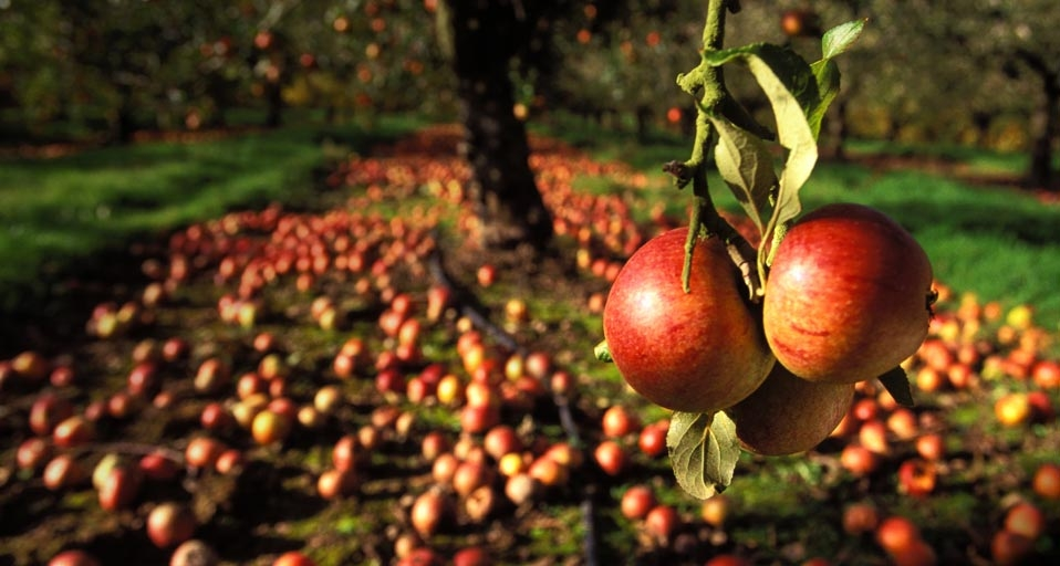 NationalAppleDay-EN-GB-PIC-MCH088889 Bing Wallpaper Of The Day Archive 61+