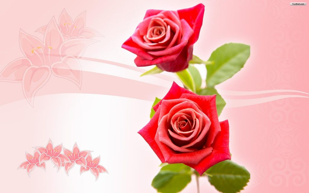 Roses-Wallpaper-Background-HD-PIC-MCH099421-1024x640 Www Rose Wallpaper 19+