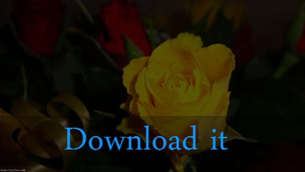 beautiful-yellow-rose-flowers-wallpapers-''-''-PIC-MCH045261-1024x576 Yellow Rose Wallpaper 22+