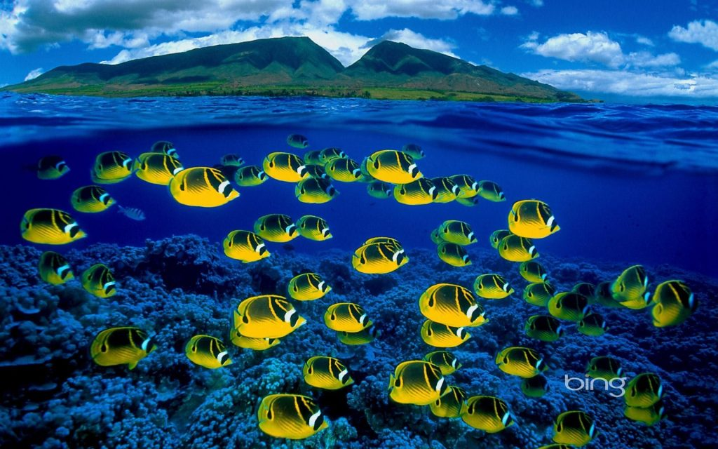 bing-wallpaper-archive-PIC-MCH046696-1024x640 Bing Wallpaper Images Archive 73+