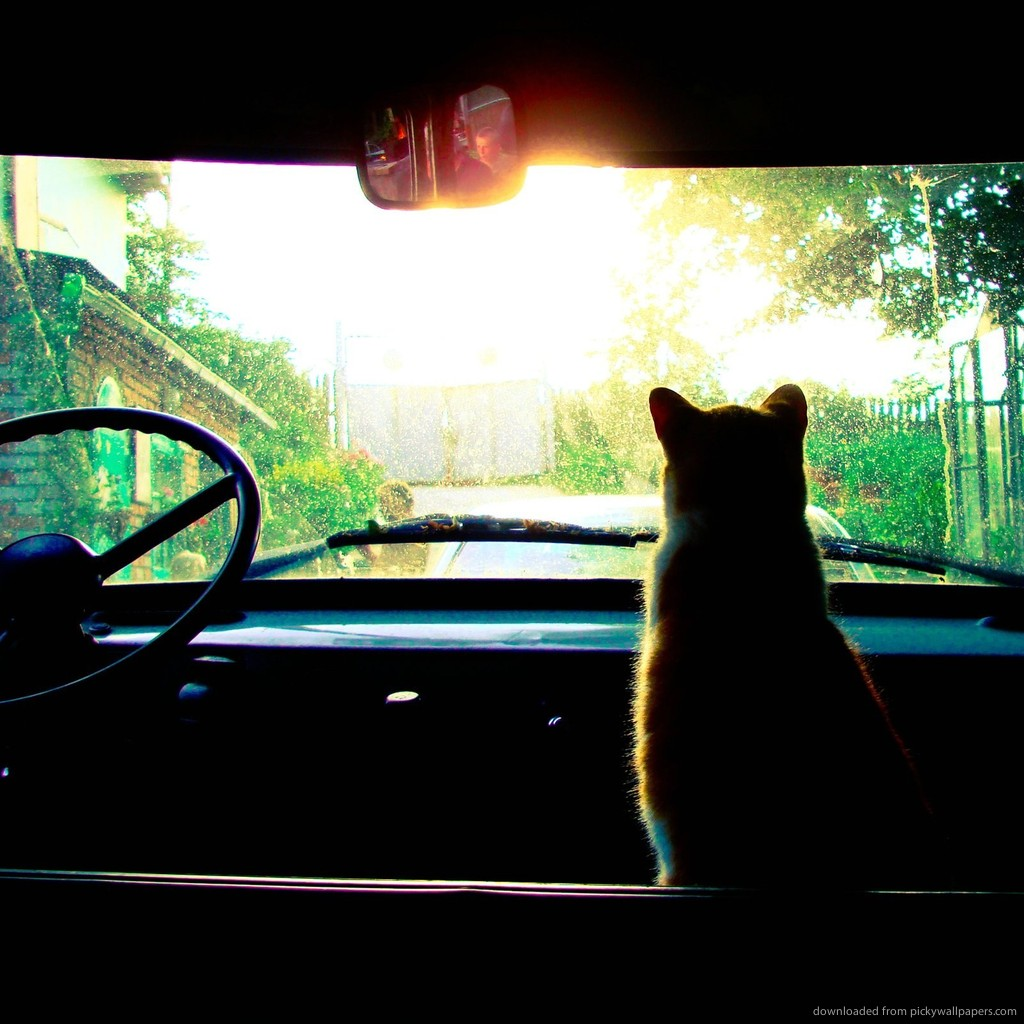 cat-in-an-old-car-PIC-MCH051534 Old Cars Wallpaper Ipad 28+