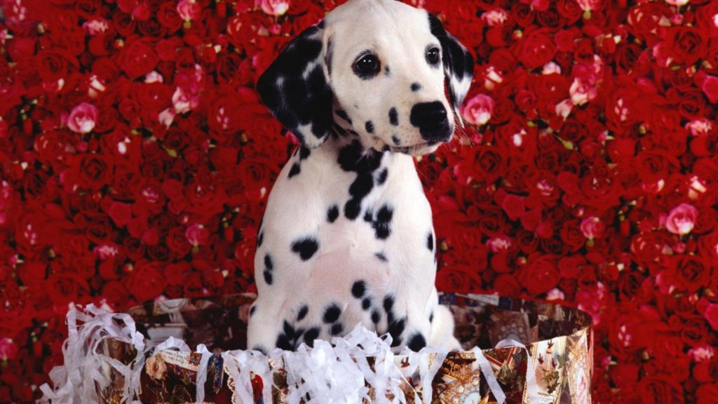 cute-dalmatian-puppy-animal-hd-wallpaper-x-PIC-MCH055429-1024x576 Dalmatian Puppies Wallpaper 34+