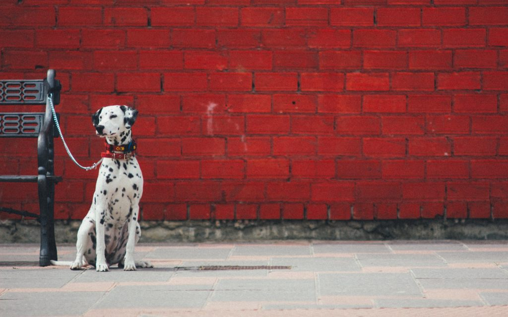 Dalmatian Background X For Mobile PIC MCH028770 1024x640