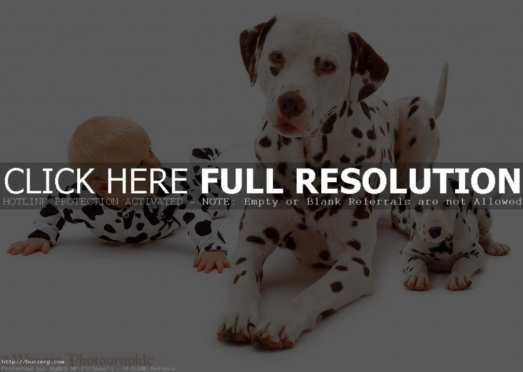dalmatian-puppies-wallpaper-hd-PIC-MCH035103-1024x729 Dalmatian Puppies Wallpaper 34+