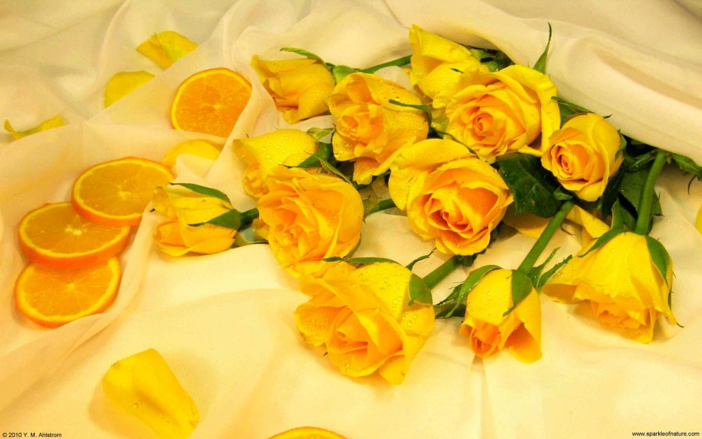 desktop-wallpaper-yellow-roses-unique-yellow-rose-backgrounds-wallpapers-hd-wallpapers-of-deskto-PIC-MCH058326-1024x640 Yellow Rose Wallpaper 22+