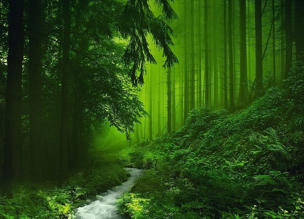 forest-deep-trees-stream-woods-wallpaper-iphone-x-PIC-MCH064729-1024x737 Pine Tree Wallpaper Hd 18+