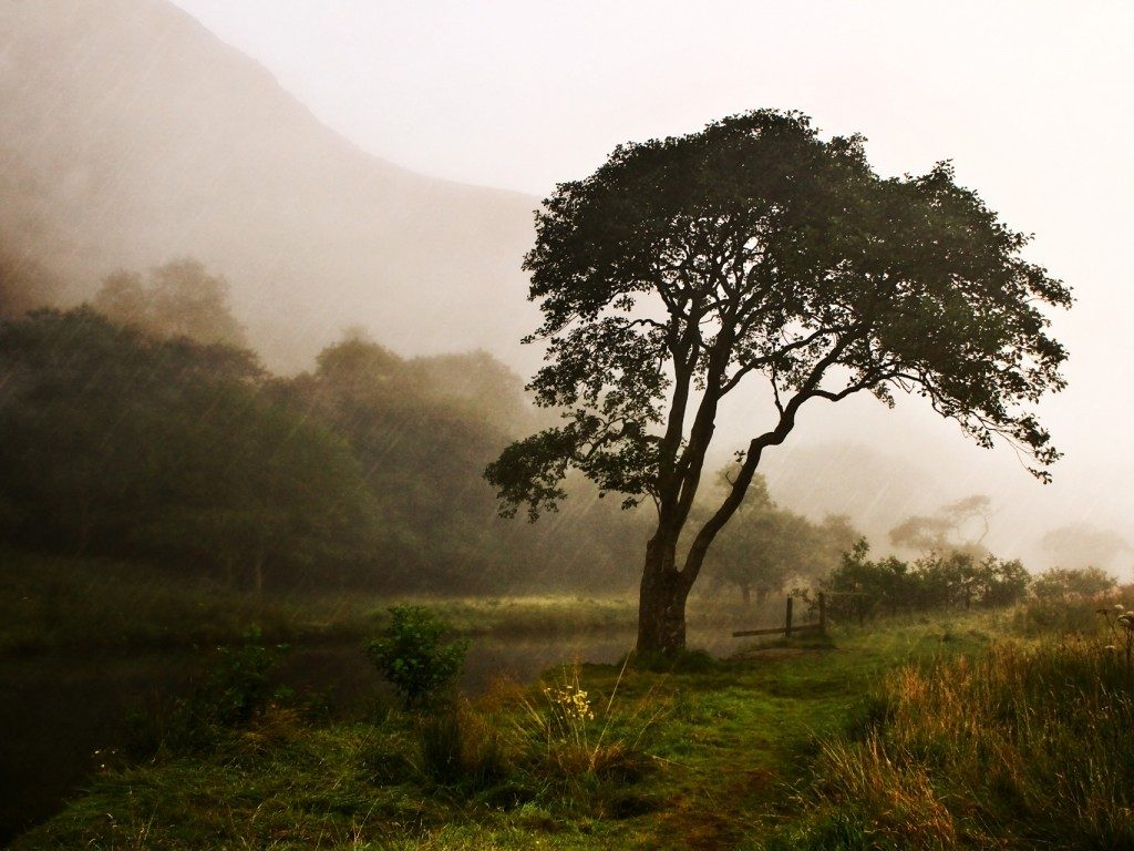 forest-tree-wet-nature-rain-hd-photos-download-PIC-MCH064751-1024x768 Hd Rain Wallpapers For Android 22+