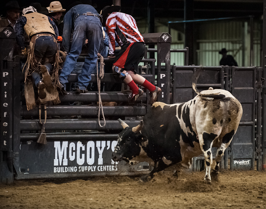 pbr-bull-riding-wallpaper-PIC-MCH094118 Pbr Wallpapers Free 24+