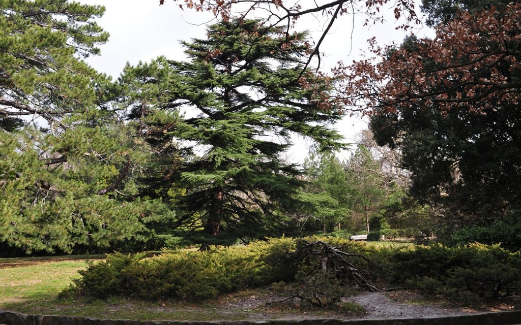 pine-trees-PIC-MCH095054-1024x640 Pine Tree Wallpaper For Walls 36+