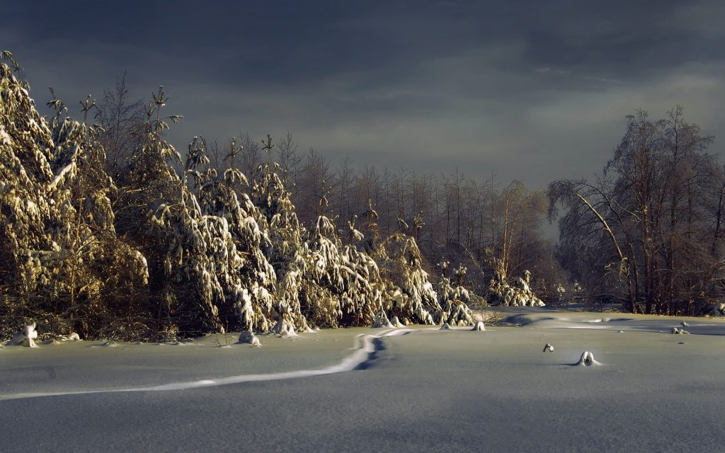 pine-trees-covered-with-snow-x-PIC-MCH095057-1024x640 Pine Tree Snow Wallpaper 30+
