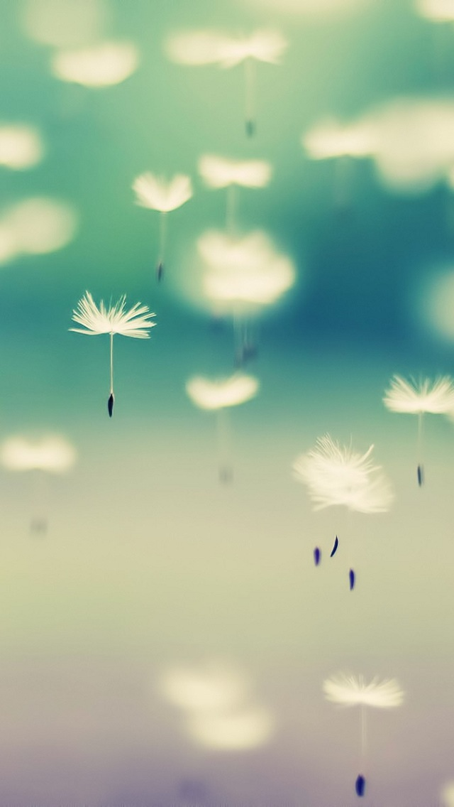Pretty Iphone Wallpaper Hd Wallpapers PIC MCH096133