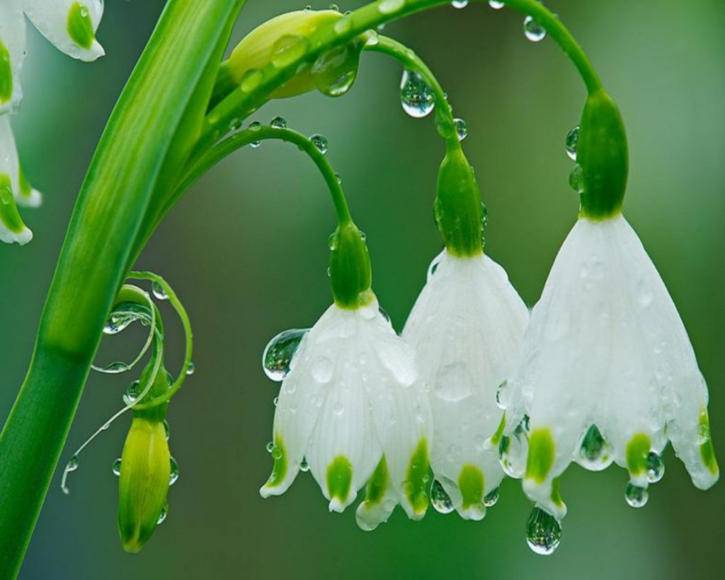 rain-picture-PIC-MCH016577-1024x819 Hd Rain Wallpapers For Laptop 46+