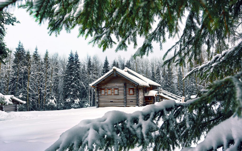 snow-pine-background-PIC-MCH0102673-1024x640 Pine Tree Wallpaper Background 29+