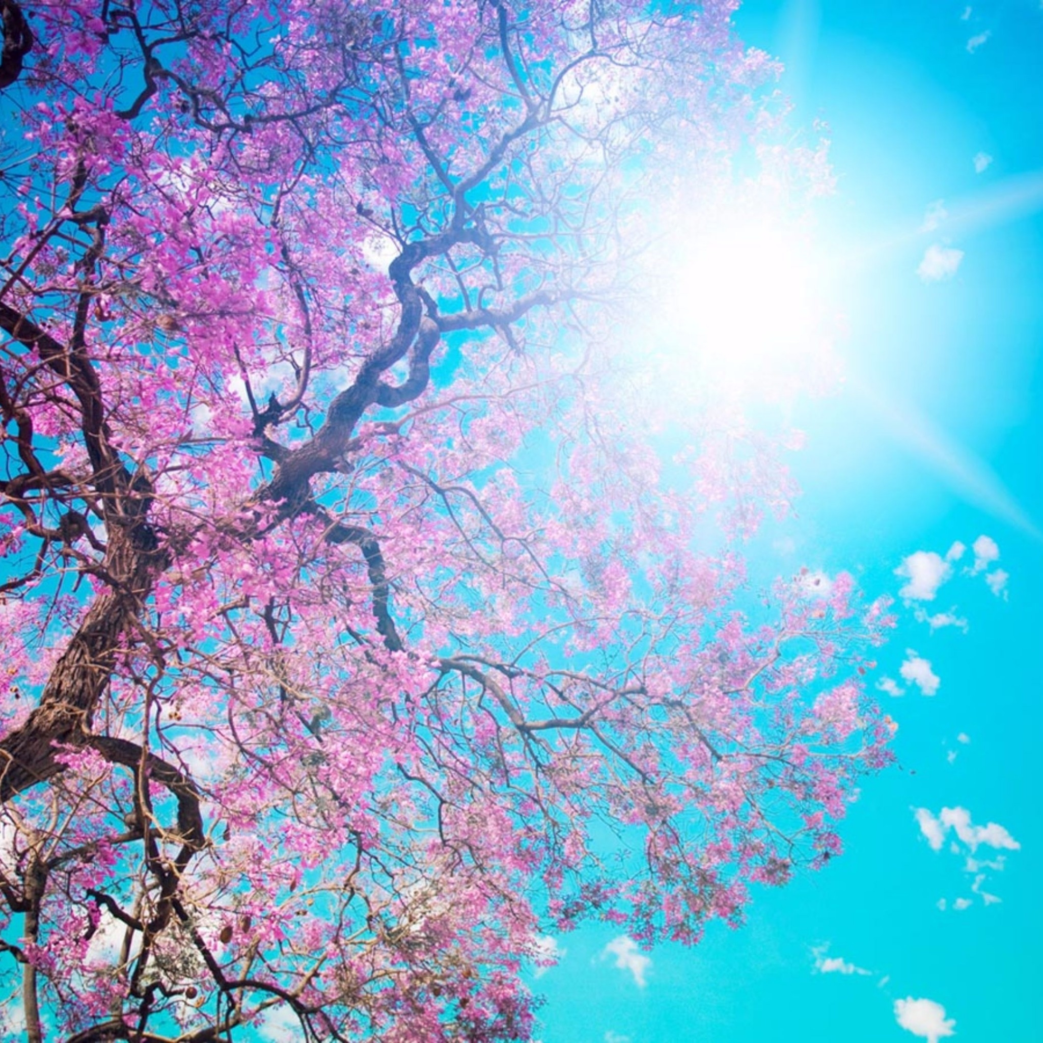 Spring K Wallpaper Free Wallpapers For Ipad PIC