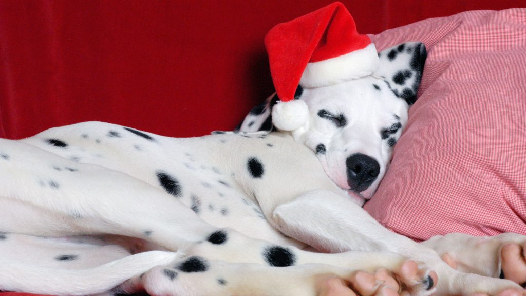 top-dalmatian-wallpaper-x-samsung-galaxy-PIC-MCH033354-1024x576 Dalmatian Puppies Wallpaper 34+