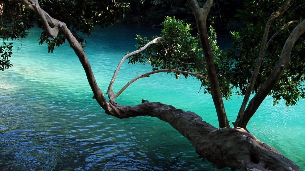 tree-branch-over-water-PIC-MCH0108103-1024x576 Water Tree Wallpaper 10+