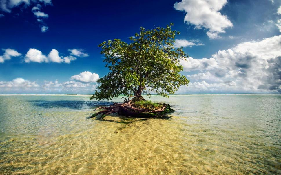 tree-in-the-water-P-wallpaper-middle-size-PIC-MCH0108109 Water Tree Wallpaper 10+