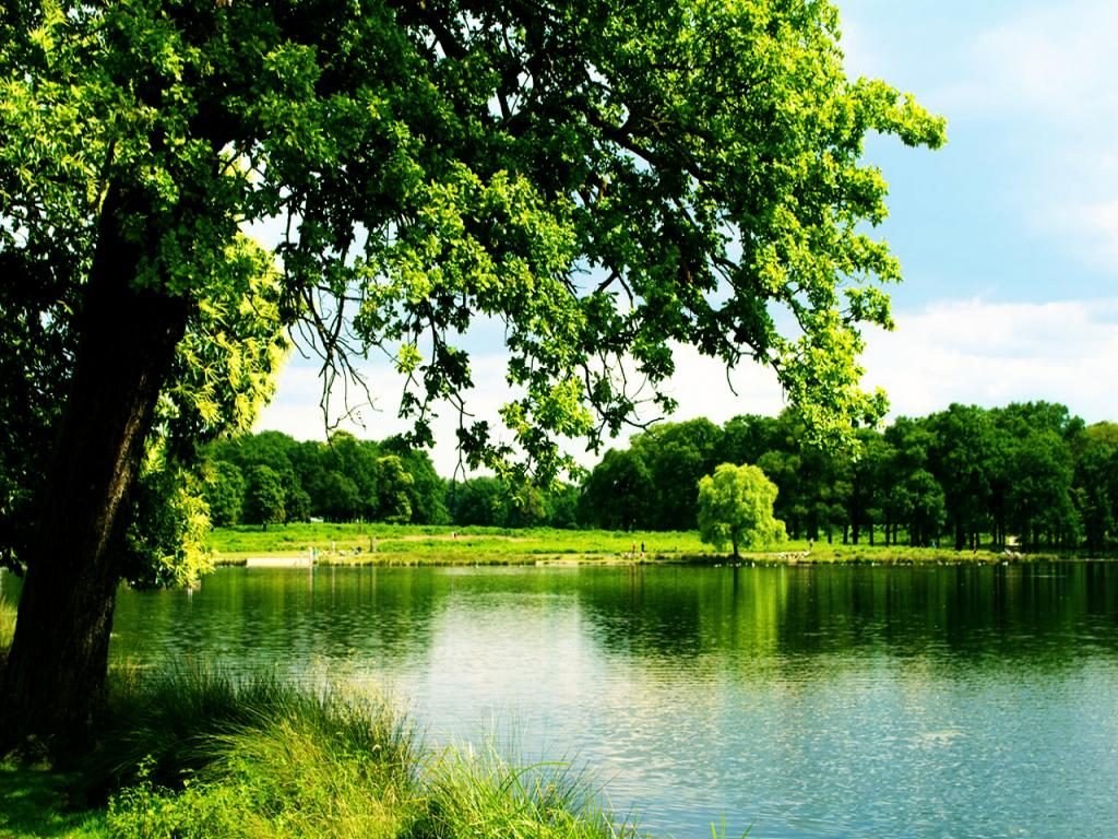 trees-over-water-wallpaper-PIC-MCH0108134-1024x768 Water Tree Wallpaper 10+