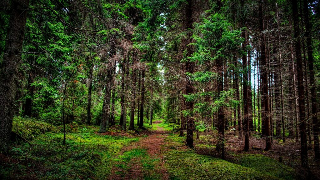 trees-pine-tree-path-forest-nature-pictures-desktop-hd-x-PIC-MCH0108135-1024x576 Pine Tree Wallpaper For Walls 36+