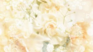 White Wedding Wallpaper 19+