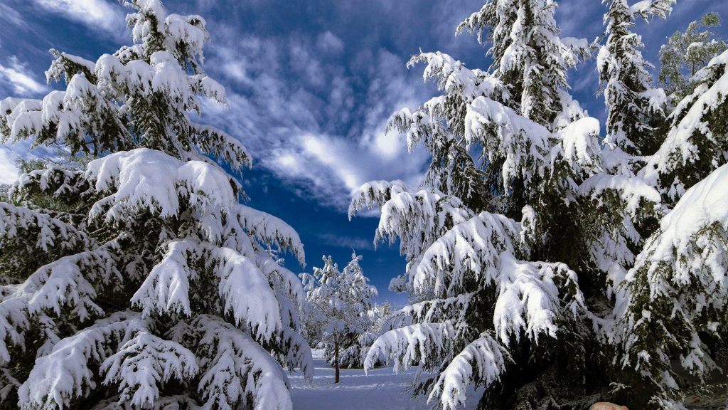 winter-tree-snowy-landscapes-trees-snow-pine-nature-wallpaper-scenes-free-download-x-PIC-MCH0116952-1024x576 Pine Tree Snow Wallpaper 30+