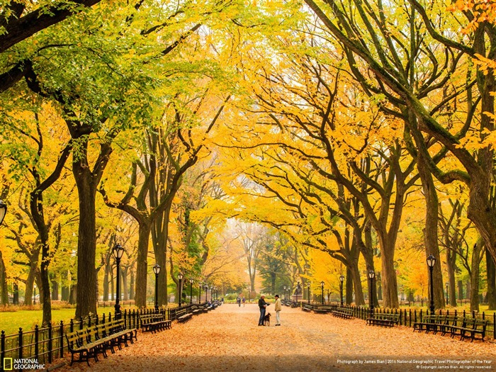 Autumn-at-Central-Park-New-York-National-Geographic-Wallpaper-medium-PIC-MCH042355 Nat Geo Wallpaper 2016 33+