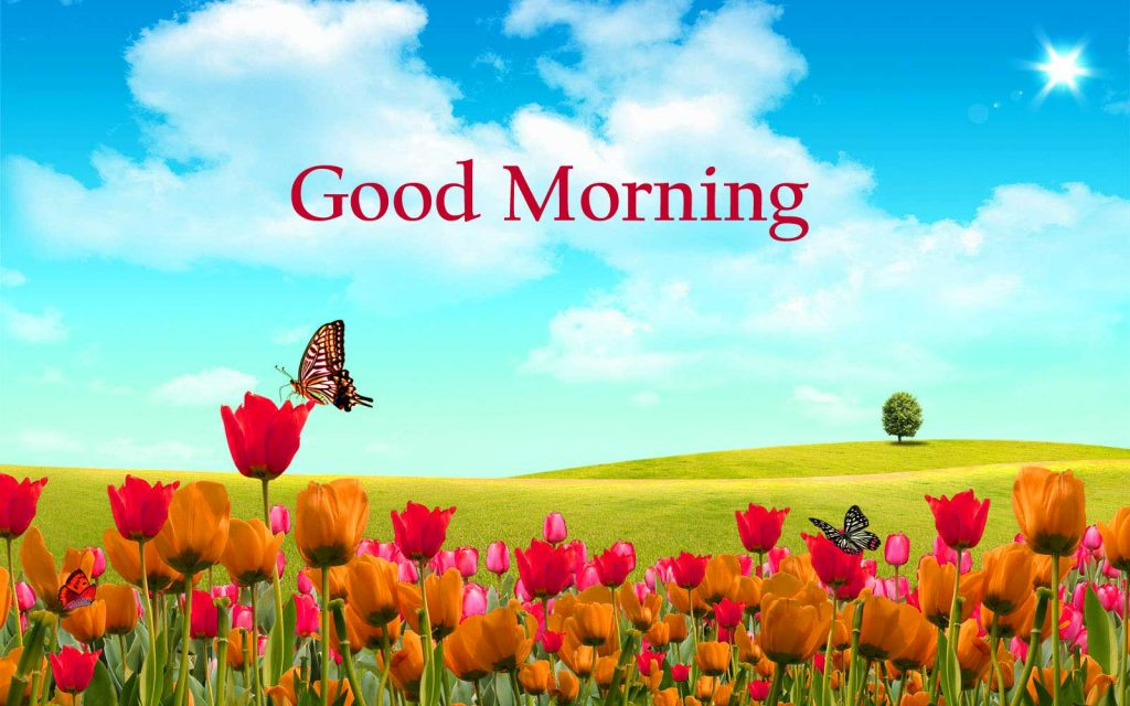 HDgoodmorning-PIC-MCH072638-1024x640 Good Morning Beautiful Wallpapers With Quotes 20+