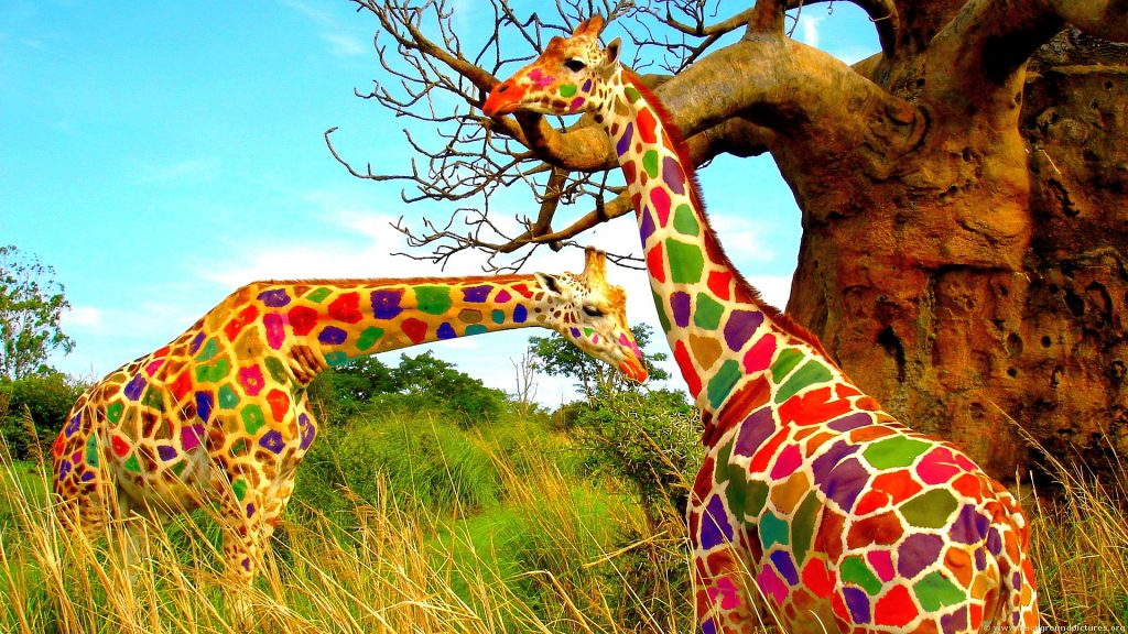 Rainbow-Giraffe-Colorful-Wallpaper-HD-PIC-MCH097400-1024x576 Giraffe Hd Wallpapers For Pc 47+