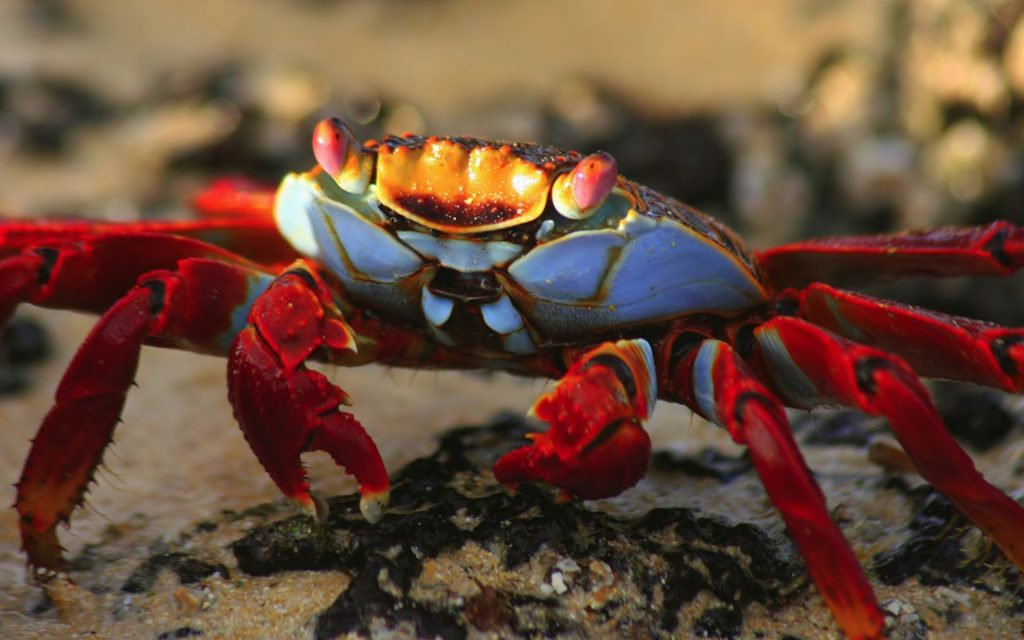 ababdccaecb-PIC-MCH035177-1024x640 Nat Geo Wallpapers Animals 53+