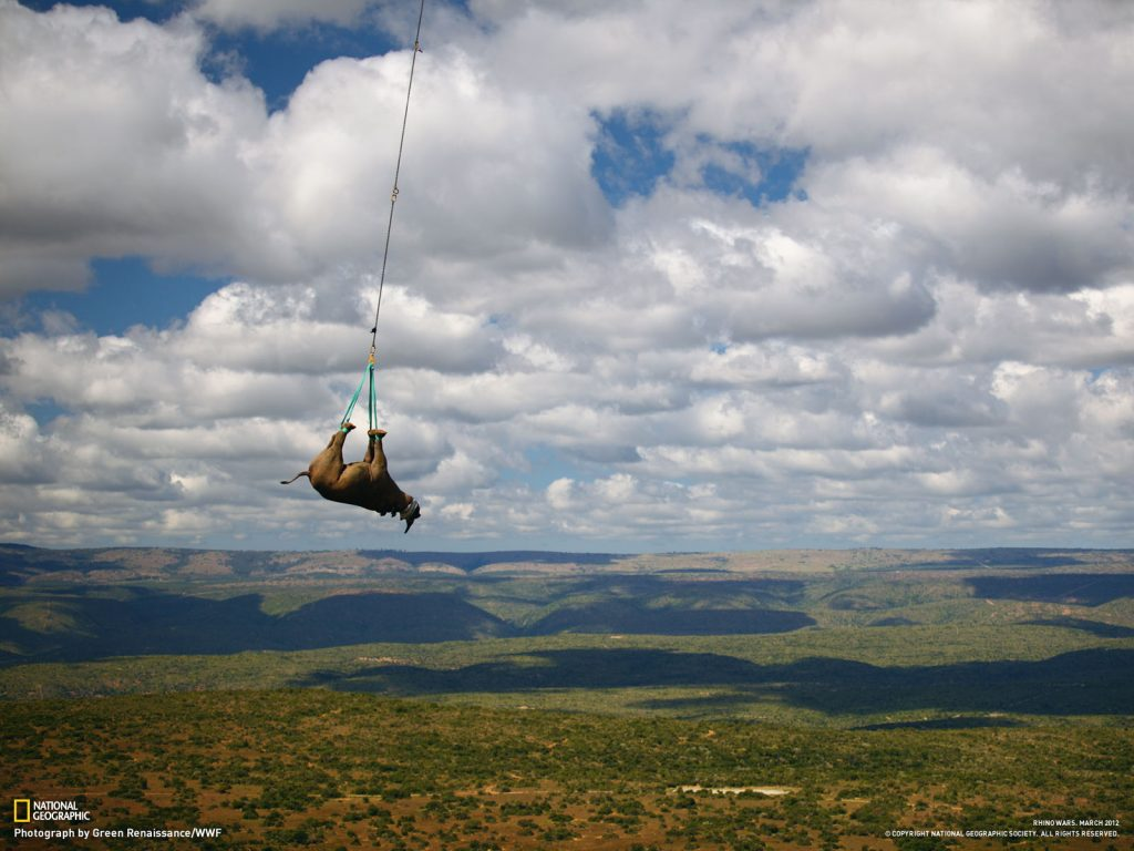 airlifted-black-rhino-PIC-MCH02938-1024x768 Nat Geo Wallpaper Mac 33+
