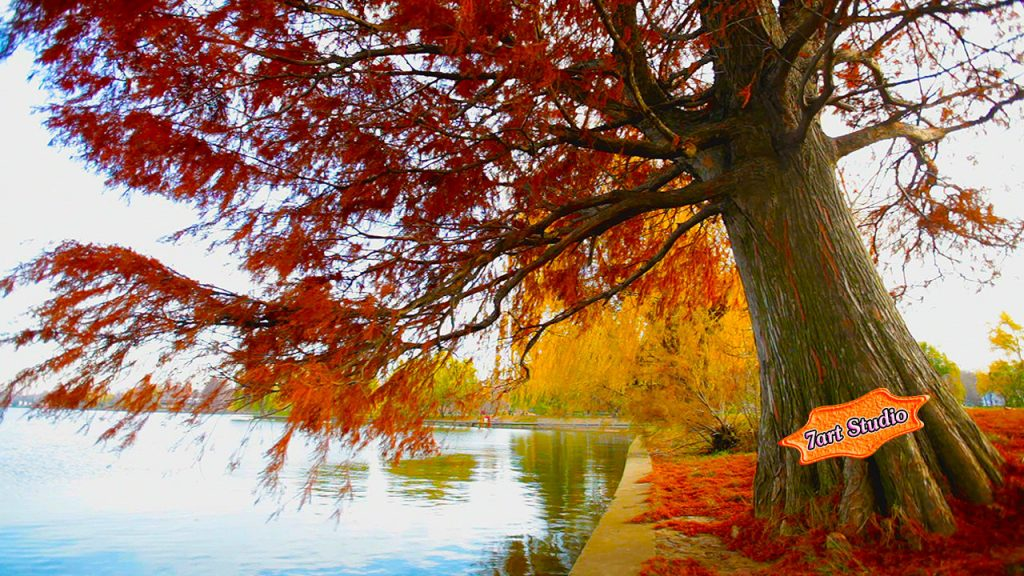 autumn-willow-view-PIC-MCH042354-1024x576 Sparkling Wallpapers Screensavers 26+