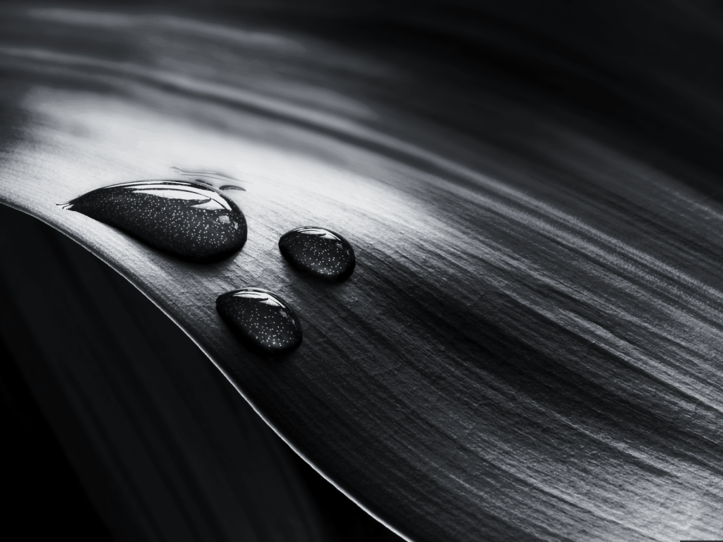 black-and-white-wallpaper-PIC-MCH047162-1024x768 Free Wallpaper Black And White Photography 19+
